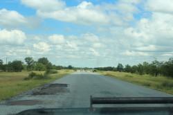 Beesten op de weg