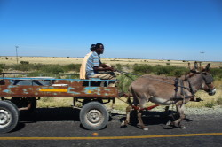 Central Kalahari, local transport